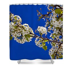 Pear Spring Shower Curtain by Chad Dutson