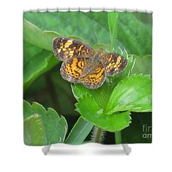 Pearl Crescent Butterfly Shower Curtain by Randi Shenkman