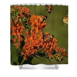 Pearly Crescentpot Butterflies Landing On Butterfly Milkweed Shower Curtain