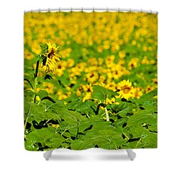 Shower Curtain featuring the photograph Peeking Above  Sea Of Yellow by Colleen Coccia