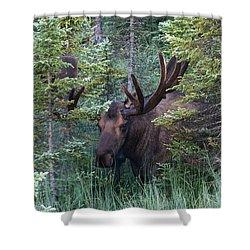 Shower Curtain featuring the photograph Peeking Through The Spruce by Doug Lloyd