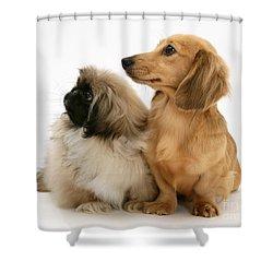 Pekingese And Dachshund Puppies Shower Curtain by Jane Burton
