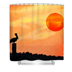 Shower Curtain featuring the photograph Pelican During Hot Day by Dan Friend