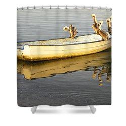 Pelican Express Shower Curtain by Anne Mott