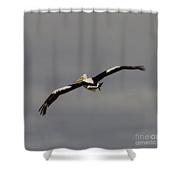 Shower Curtain featuring the photograph Pelican In Flight 2 by Blair Stuart