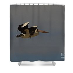 Shower Curtain featuring the photograph Pelican In Flight 3 by Blair Stuart
