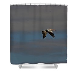 Shower Curtain featuring the photograph Pelican In Flight 4 by Blair Stuart