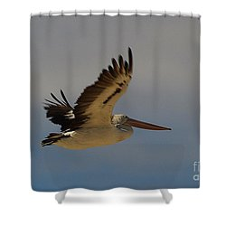 Shower Curtain featuring the photograph Pelican In Flight 5 by Blair Stuart