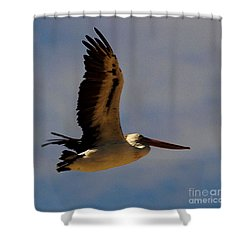 Shower Curtain featuring the photograph Pelican In Flight by Blair Stuart