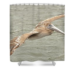 Pelican On The Water Shower Curtain by Rick Frost