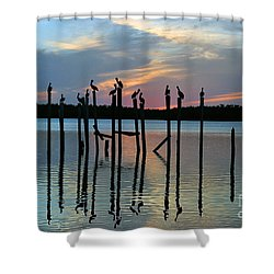Shower Curtain featuring the photograph Pelican Resting End Of Day by Dan Friend