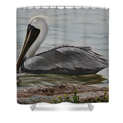 Pelican Swim Shower Curtain