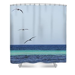 Pelicans In Flight Over Turquoise Blue Water.  Shower Curtain