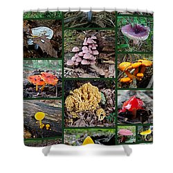 Pennsylvania Mushrooms Collage 2 Shower Curtain by Mother Nature