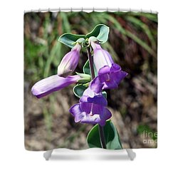 Penstemon Shower Curtain by Dorrene BrownButterfield