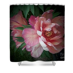 Peonies No. 8 Shower Curtain