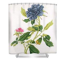 Peony Shower Curtain by Georg Dionysius Ehret
