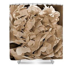 Peony Named Shirley Temple Shower Curtain by J McCombie