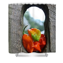 Peppered Fence Shower Curtain by Lauri Novak