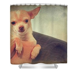 Perched Up High Shower Curtain by Laurie Search