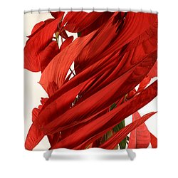 Peripheral Streak Image Of A Poinsettia Shower Curtain by Ted Kinsman