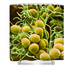 Peronospora Parasitica Shower Curtain by Biophoto Associates and Photo Researchers