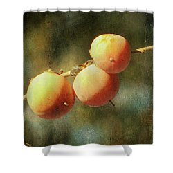 Persimmons Shower Curtain by Amy Tyler