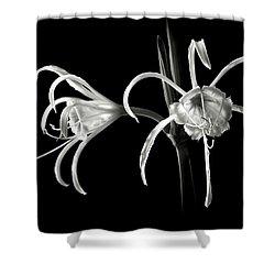 Peruvian Daffodil In Black And White Shower Curtain