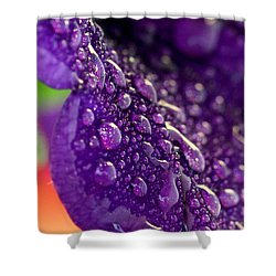 Shower Curtain featuring the photograph Petunia Raindrops by Suzanne Stout
