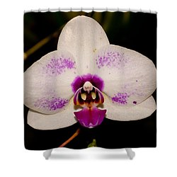 Shower Curtain featuring the photograph Phalaenopsis White Orchid by Tikvah's Hope