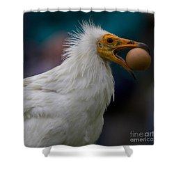 Pharaos Chicken  Shower Curtain by Heiko Koehrer-Wagner