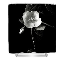 Philadelphus In Black And White Shower Curtain