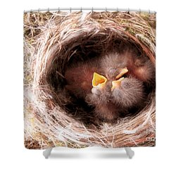 Phoebe Babies In Nest Shower Curtain by Angie Rea