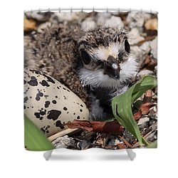 Killdeer Baby - Photo 25 Shower Curtain