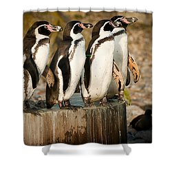 Pick Up A Penguin Shower Curtain
