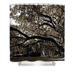 Shower Curtain featuring the photograph Picnic Under The Oak by DigiArt Diaries by Vicky B Fuller