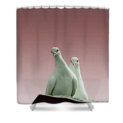 Pigeons In The Pink Shower Curtain by Linsey Williams