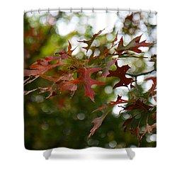 Pin Oak In Autumn Shower Curtain