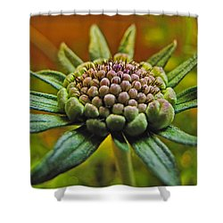 Shower Curtain featuring the photograph Pinchshin Bud by Debbie Portwood