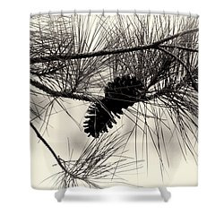 Pine Cones In The Treetops Shower Curtain by Douglas Barnard
