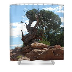 Shower Curtain featuring the photograph Pine Tree By The Canyon by Dany Lison