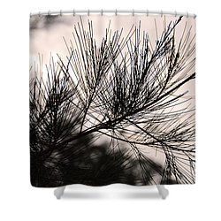 pine tree needle silhouette shower curtain by ivy ho