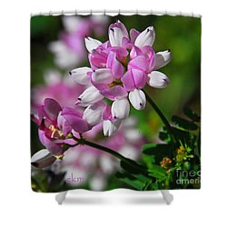Pink And White Shower Curtain by Cindy Manero
