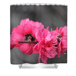 Pink Blossoms  Shower Curtain by Amy Gallagher