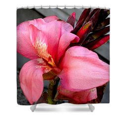 Pink Canna Shower Curtain by Renate Nadi Wesley