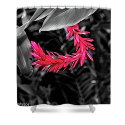 Shower Curtain featuring the photograph Pink Curve by Rachel Cohen