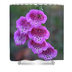 Pink Digitalis Shower Curtain