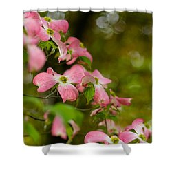 Pink Dogwood Blooms Shower Curtain