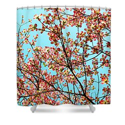 Pink Dogwood Sky Shower Curtain by Debbie Portwood