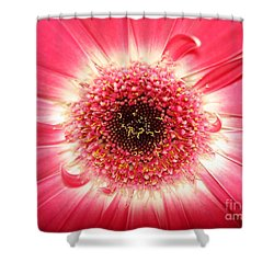Shower Curtain featuring the photograph Pink Gerbera Daisy Close-up by Kerri Mortenson